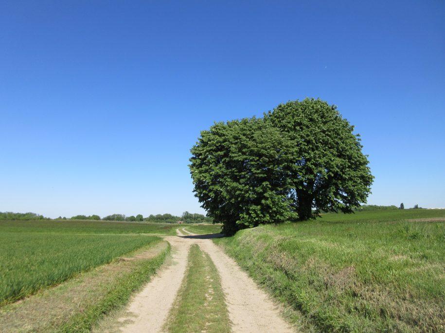 Kapel onder de lindeboom